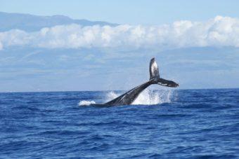 新潟で人気の結婚指輪と婚約指輪 にわか(ニワカ) | 海が好きなカップルが探す新潟で人気のマリッジリング、鯨の結婚指輪